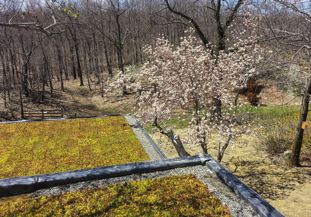 Vernon nj_lake_house_green_roof.png