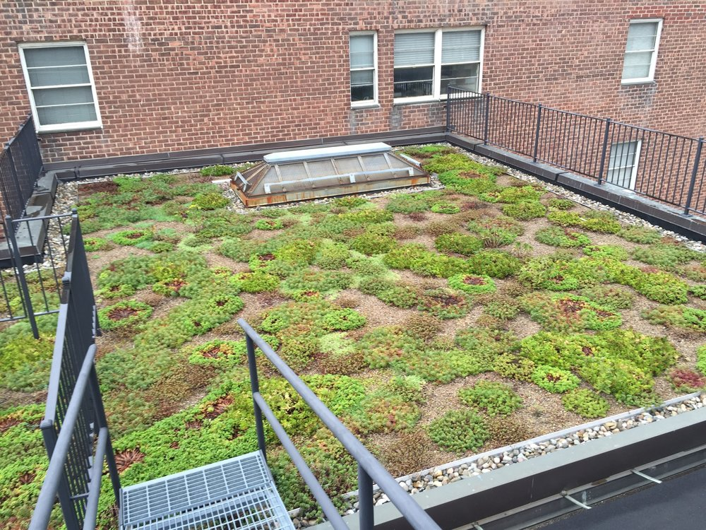 6th Floor Green Roof Year Three