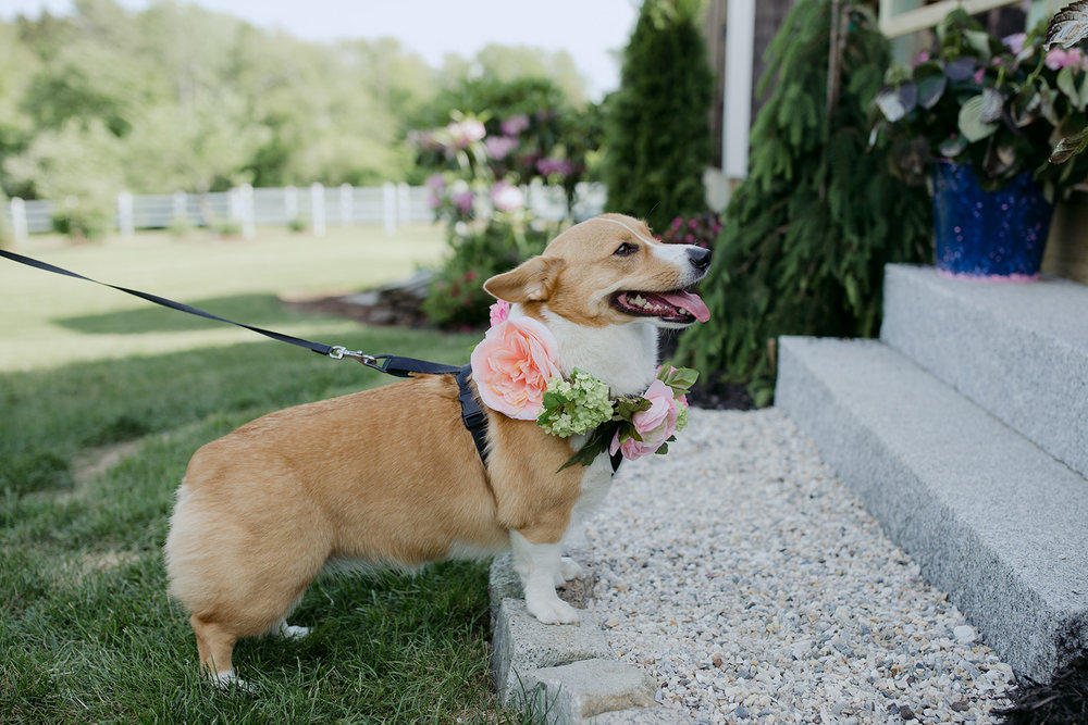 wedding dog maine garden barn summer