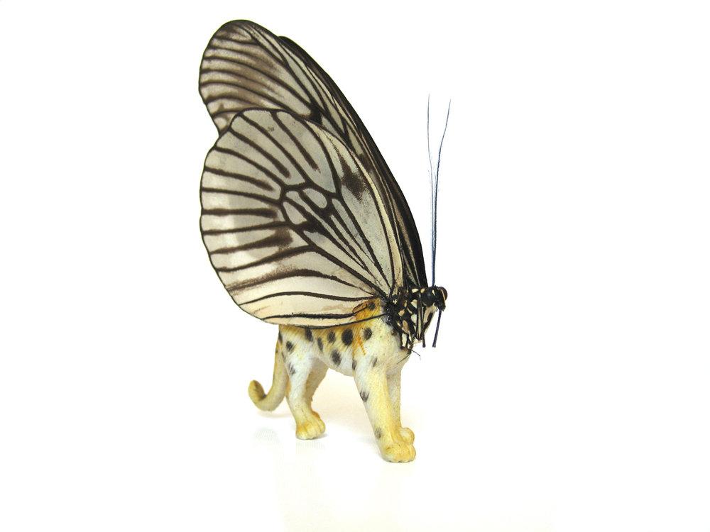 Leopardfly