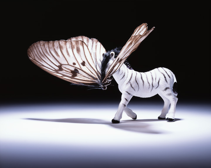 Zebrafly