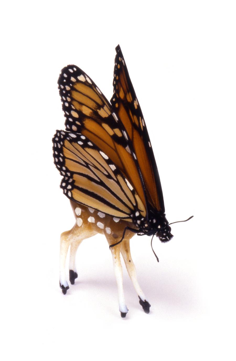 Deerfly