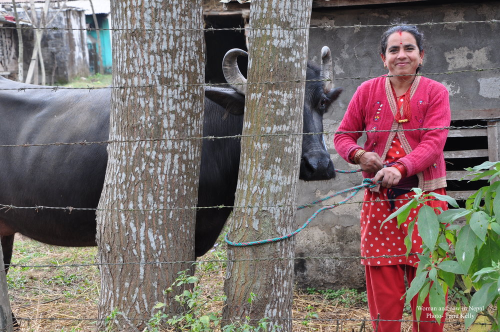 Women and cow in Nepal - Photo Terra Kelly
