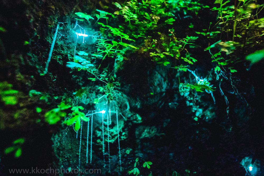 Franz Joseph Glacier Glow worm dell