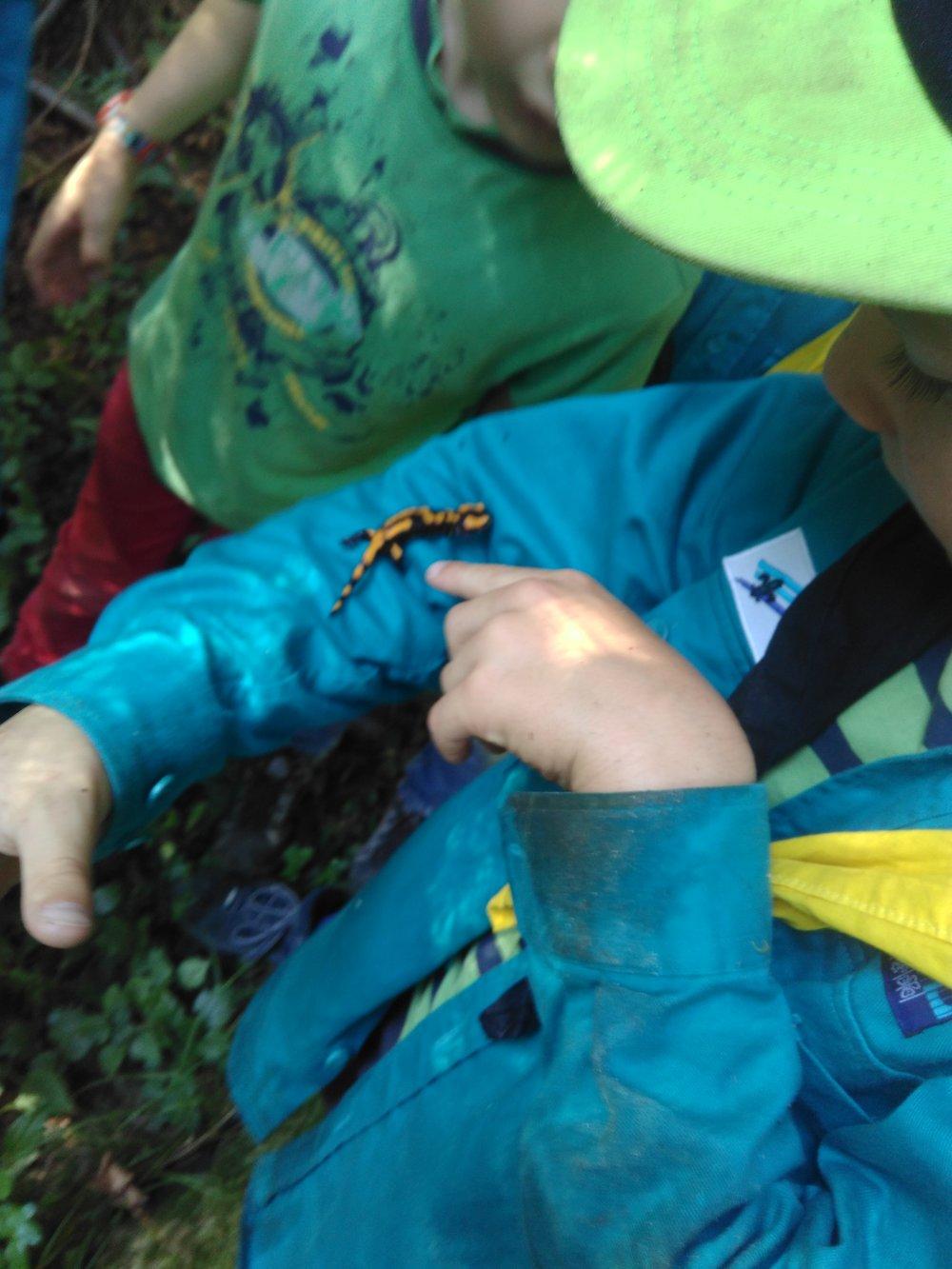 Besuch eines Salamanders