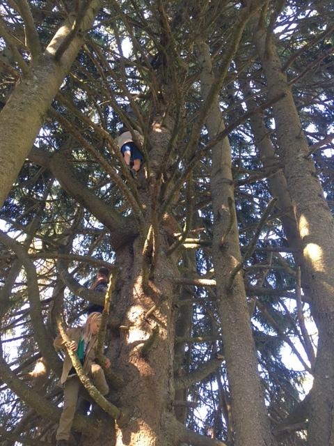 Kein Baum zu gross