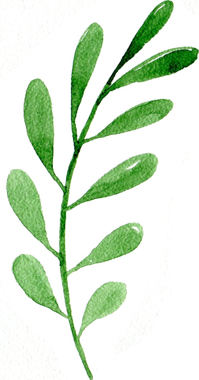Green Leaf One.png