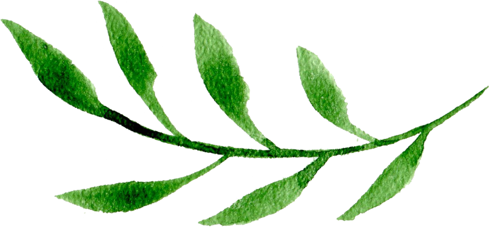 Green Leaf Two.png