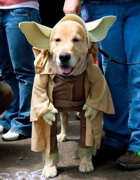 pet+costume+.jpg