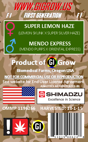 LEMON BALM G.I. SATIVA GENETICS