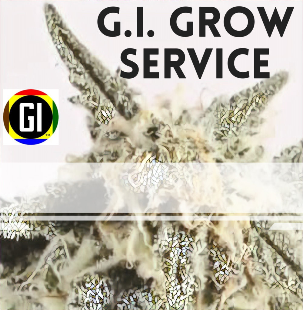 GIGROW SERVICE MAIN PHOTO.JPG