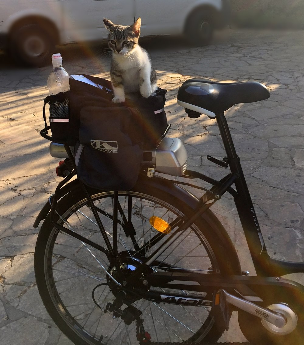 Our bici -