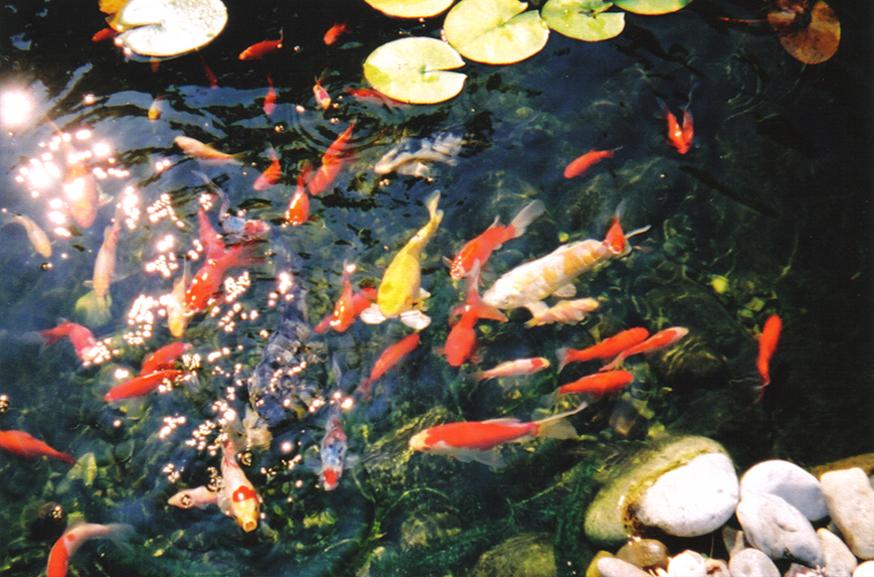 Pond-Image-B.jpg