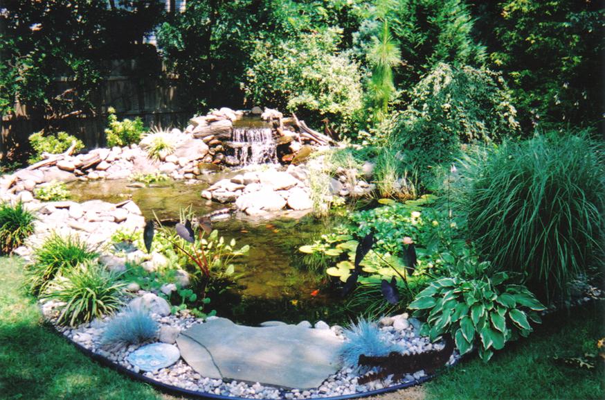 Pond-Image-C.jpg