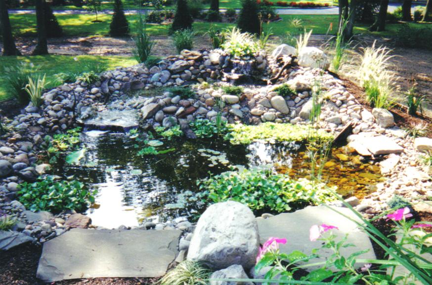Pond-Image-D.jpg