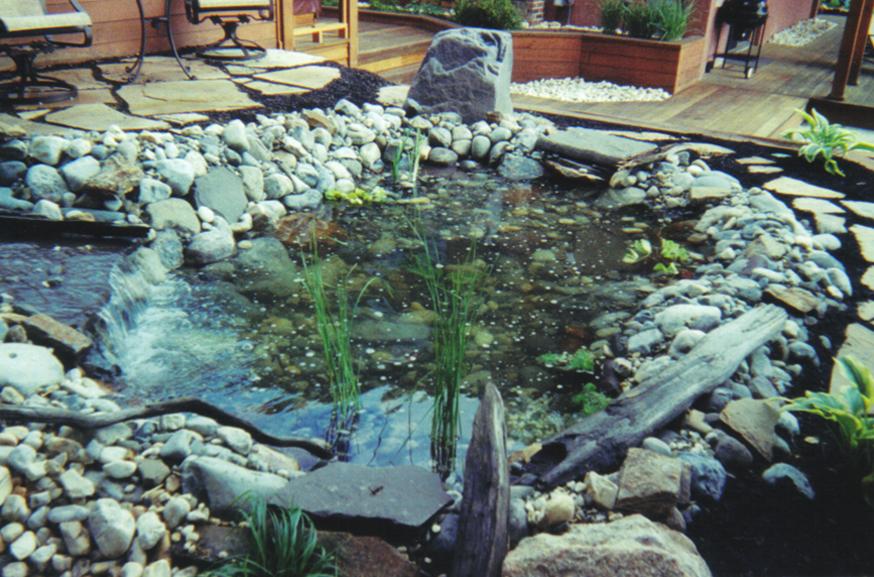 Pond-Image-F.jpg