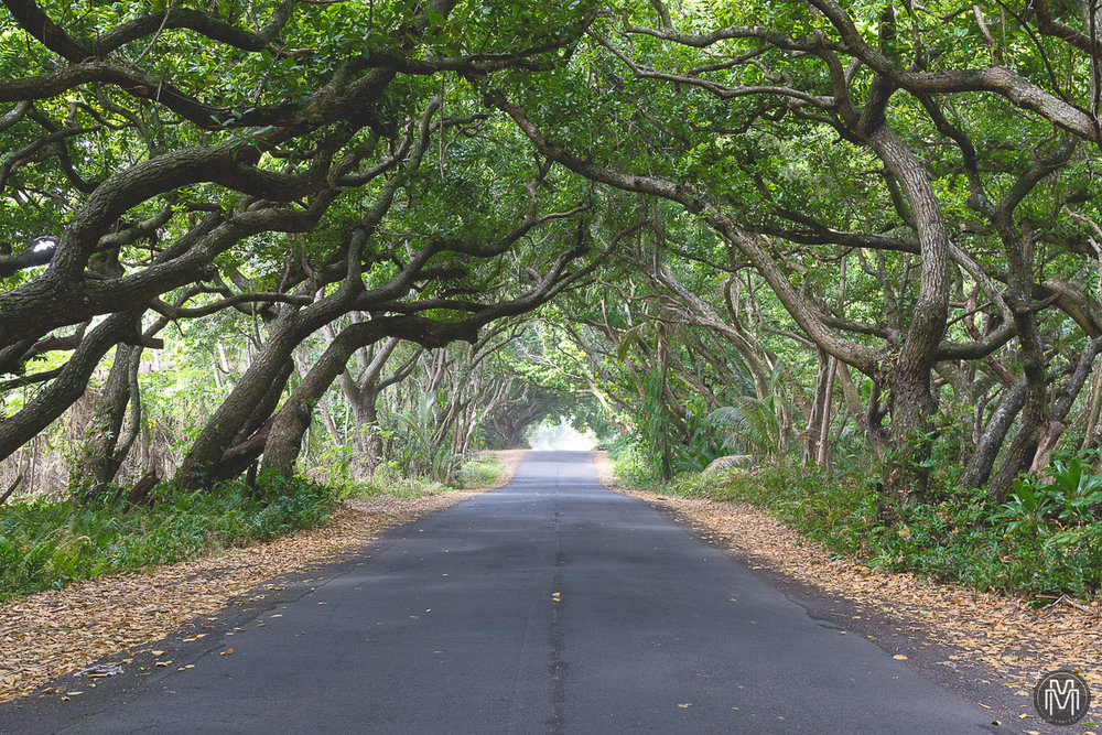 Red-Road-Puna-Hawaii-1.jpg