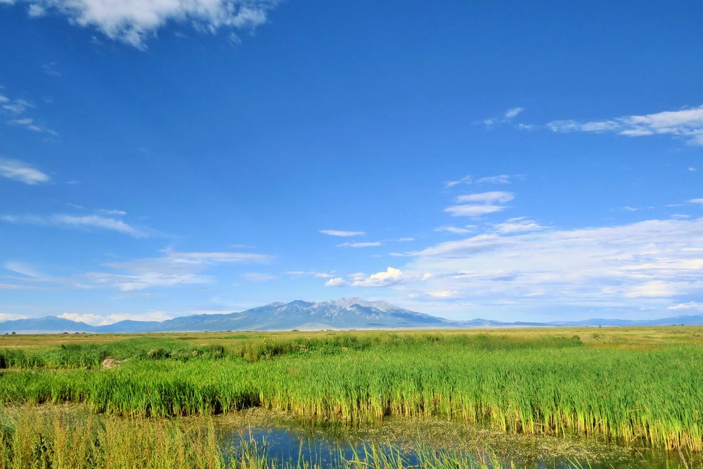 Costilla marsh.jpg