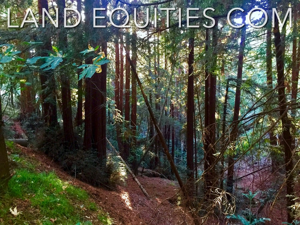105-081-20 Redwood Dr-14.jpg