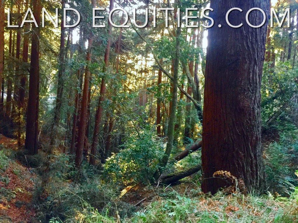 105-081-20 Redwood Dr-4.jpg