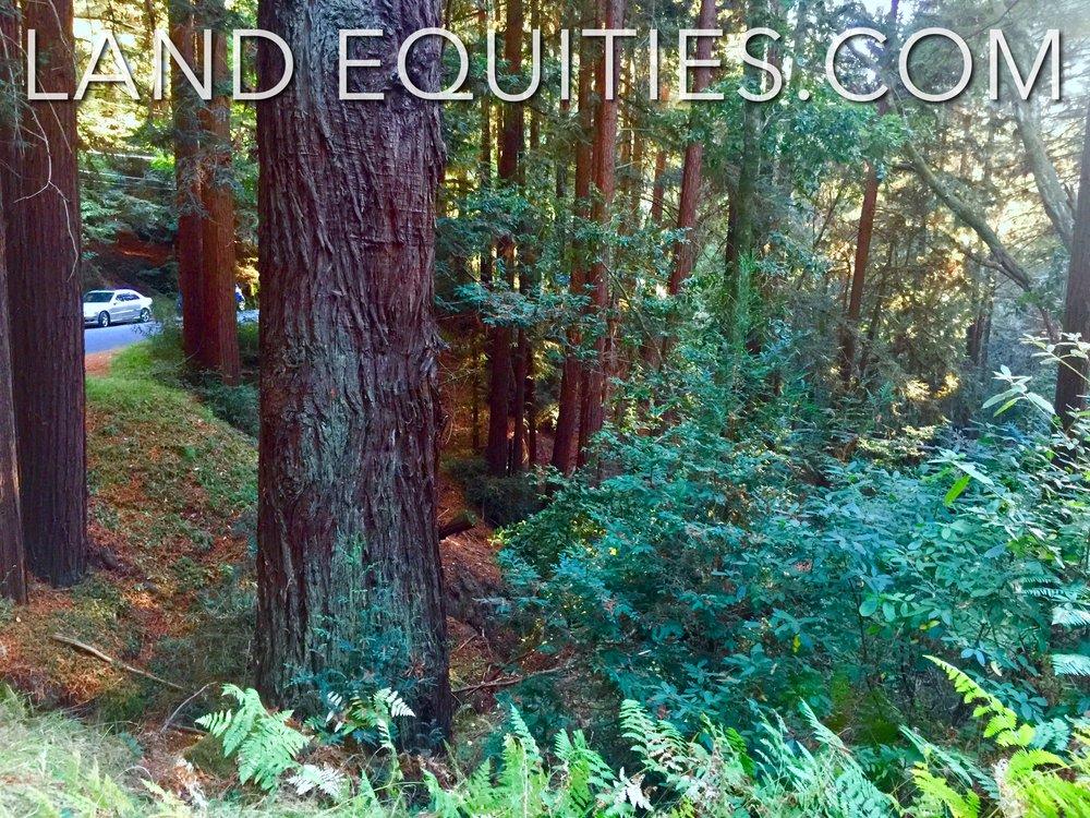 105-081-20 Redwood Dr-8.jpg