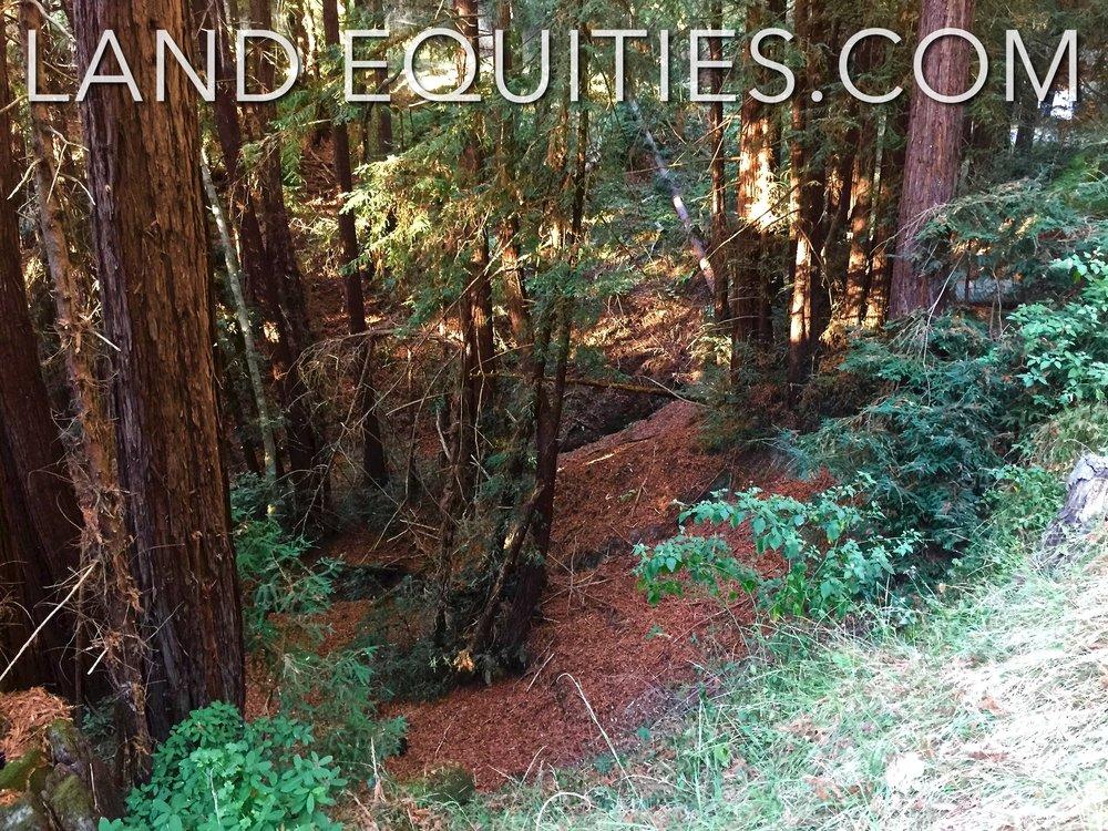 105-081-20 Redwood Dr-23.jpg