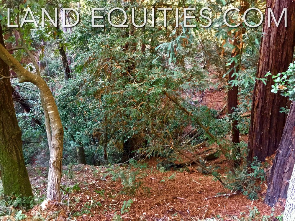 105-081-20 Redwood Dr-25.jpg