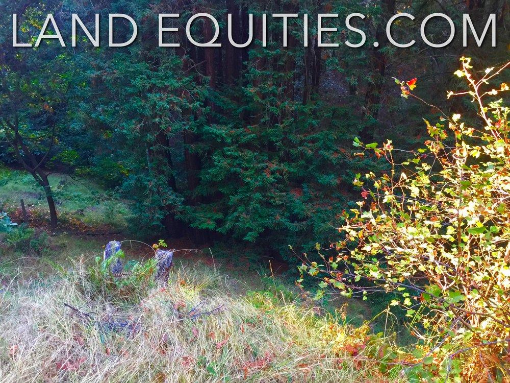 105-081-20 Redwood Dr-28.jpg