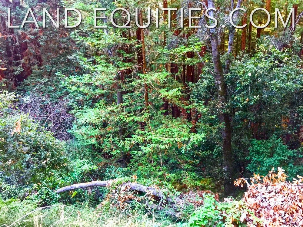 105-081-20 Redwood Dr-26.jpg