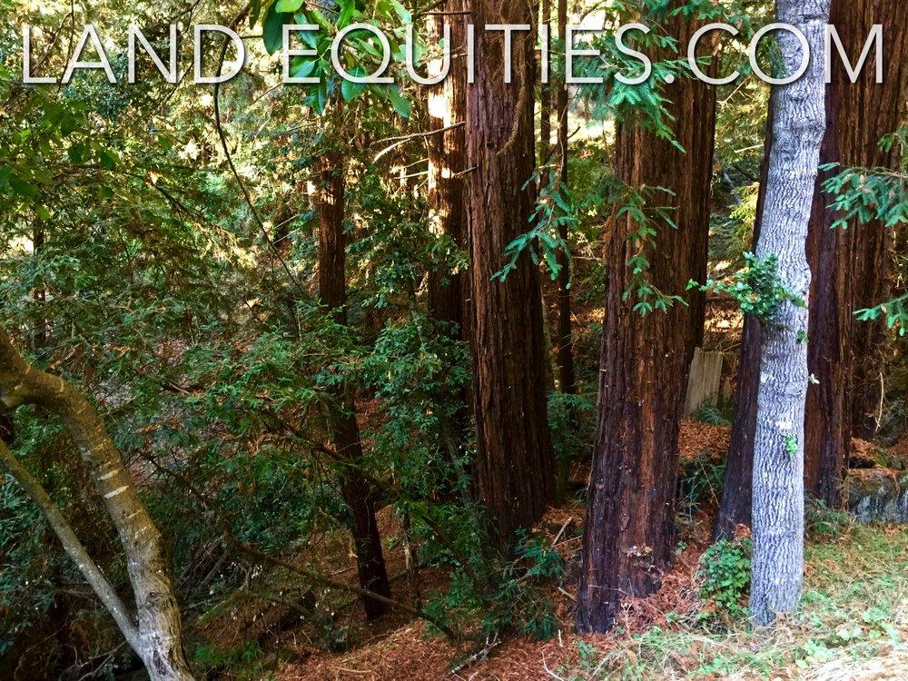 105-081-20 Redwood Dr-31.jpg