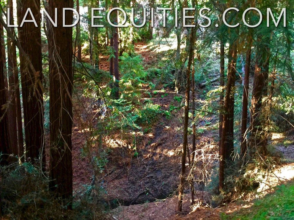 105-081-20 Redwood Dr-18.jpg