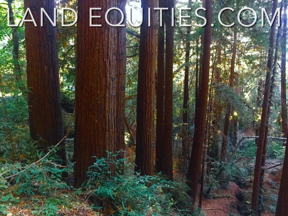 105-081-20 Redwood Dr-13.jpg