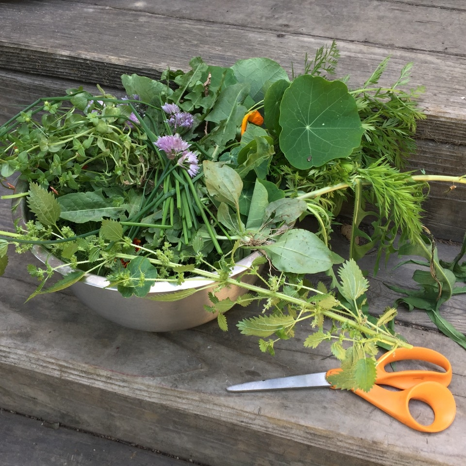 Is picking edible weeds the new trend?   San Jose Mercury News.        July 16, 2017