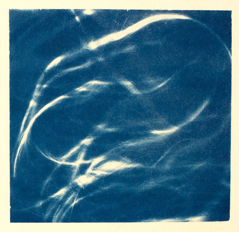 hair  (study III), 2016, cyanotype, 32 x 24 cm