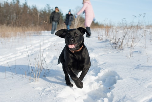 dog-running-snow.jpg