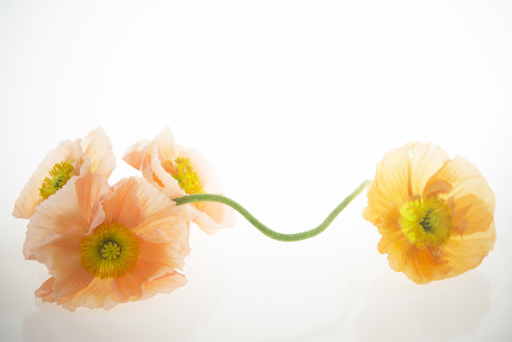 Poppies_09.jpg