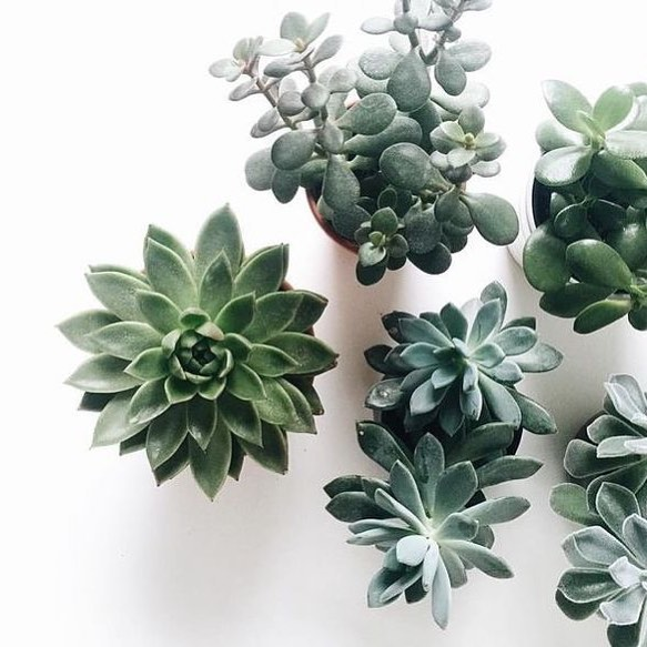 Have a weird, new obsession with succulents? Yep, pretty sure we all do. #HydraStudios. Coming soon.