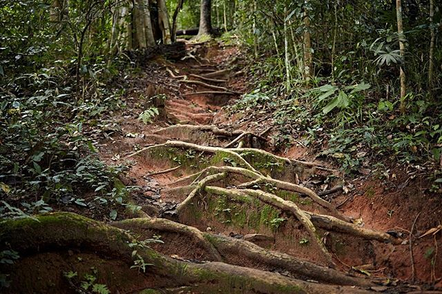These roots were the perfect natural staircase up Doi Suthep.
