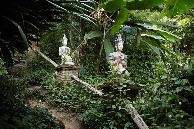 The only break from the dense jungle on the way to the summit of Doi Suthep is the beautiful temple and waterfalls that are right around this corner...