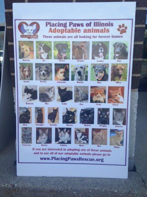 Animal-poster