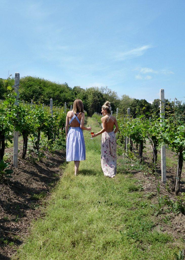 vineyard serbia.jpg