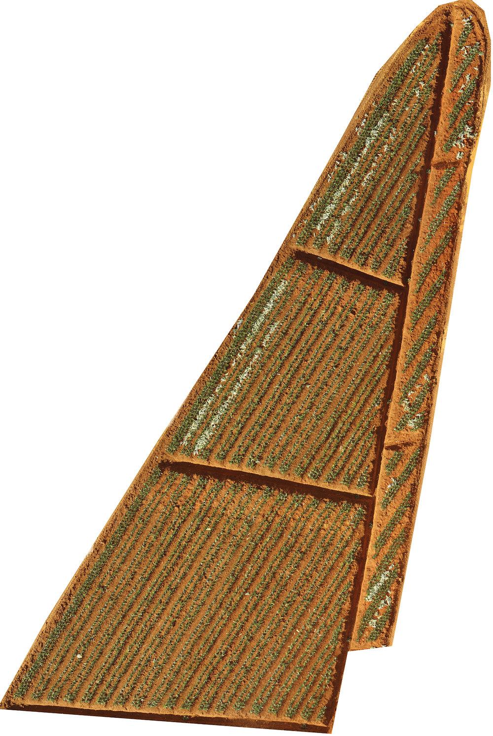 ortomosaico de lotes de plantacion de piña