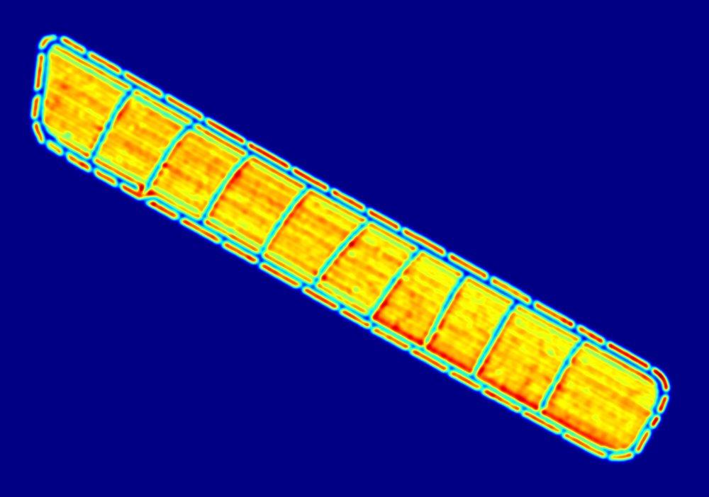 density_map_518_39.jpg