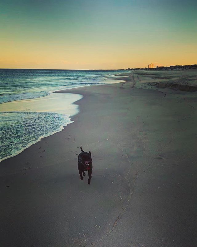You can't beat a 6am start with a run on the beach with a mans best friend. Get up and get the sea breeze into your lungs - you won't regret it #beatthesun #goodmorning #dog #ocean #beach #wanderer #unforgivingminute