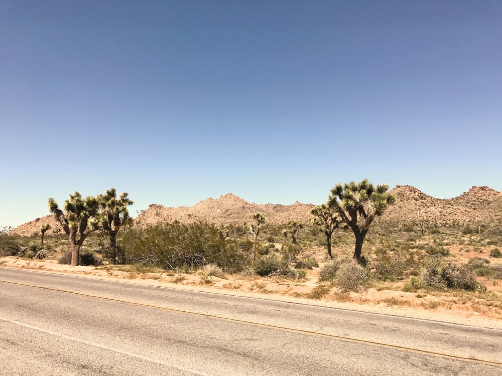 Joshua Tree National Paark