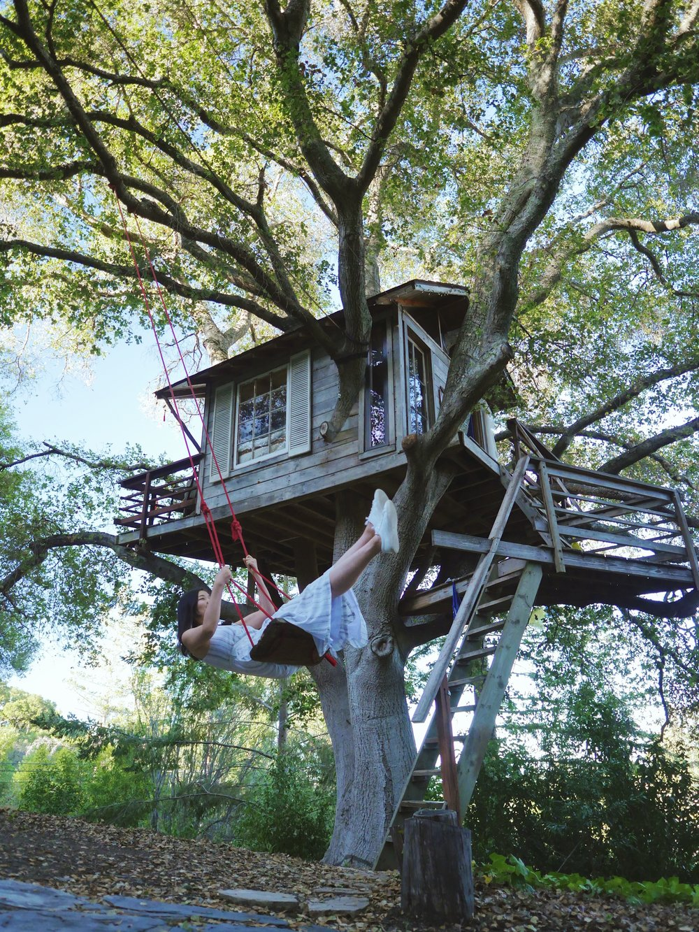 @ Doug's Tree House, Burlingame, California