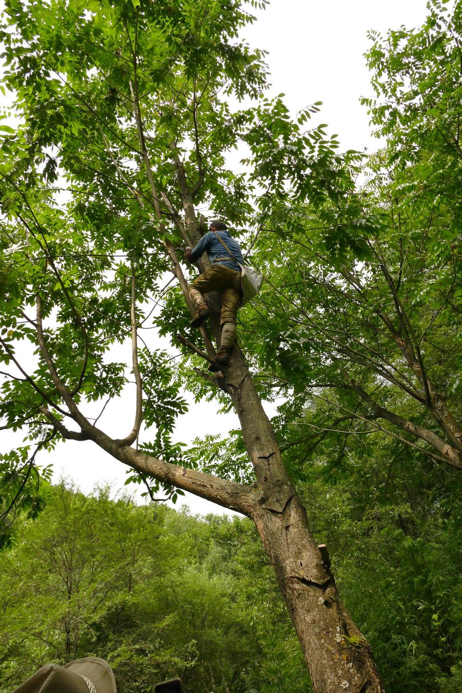 無駄のない動きでするすると木に登っていきます