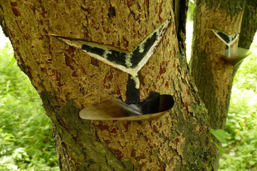 【漆の受皿】昔は木の葉か貝殻を利用、現在は合成樹脂