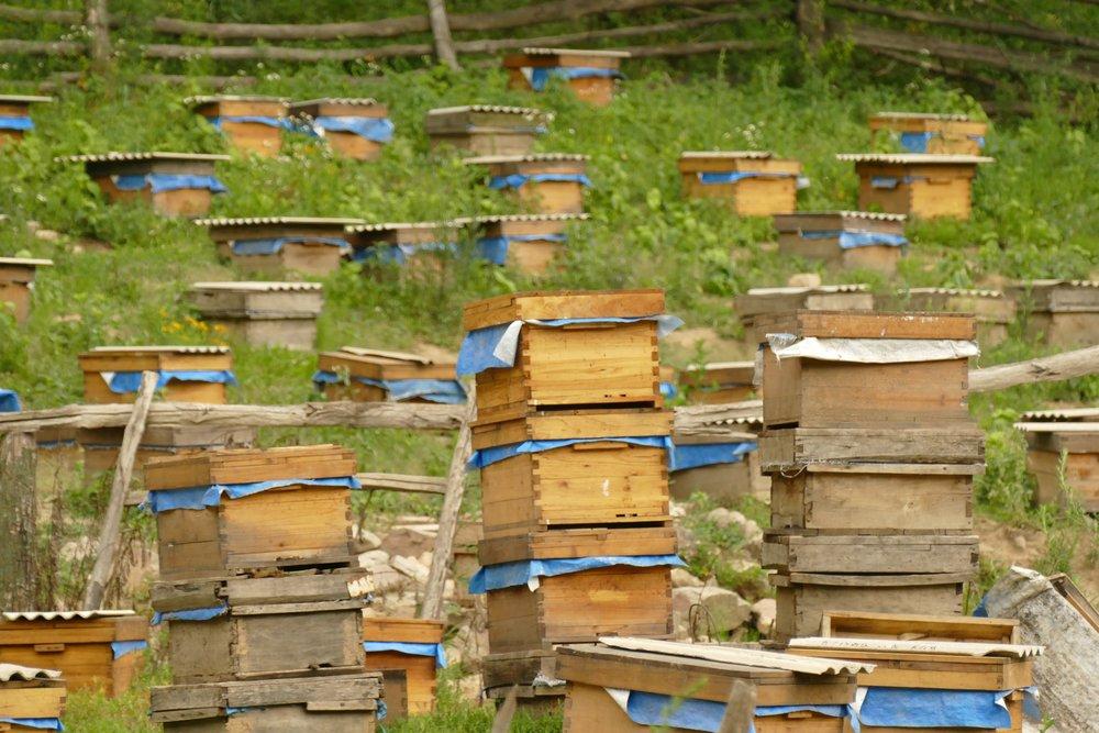 産地の山の下の方では養蜂がよく見られます