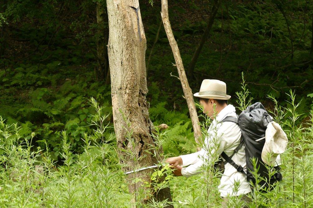 樹高、樹径の調査